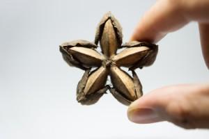 Sacha Inchi - als Öl ein pflegender Inhaltsstoff für Kosmetik